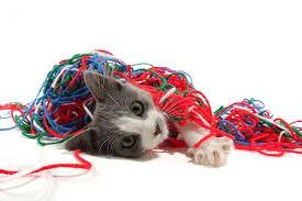 kitten teathered