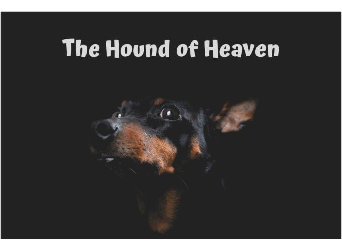 hound-e1549302710229.png